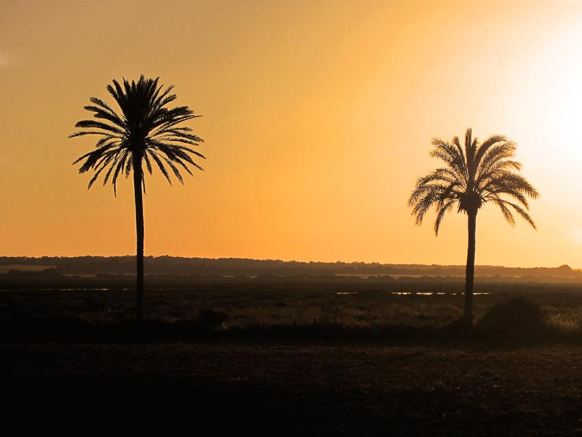 Mallorca, Palmen im Sonnenuntergang